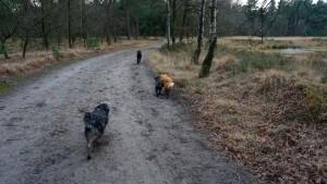 151227 Doggy Date-Stiphoutse-bossen057