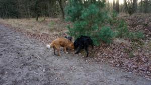 151227 Doggy Date-Stiphoutse-bossen063