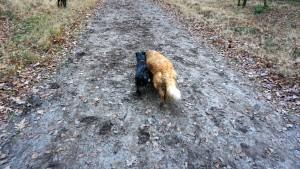 151227 Doggy Date-Stiphoutse-bossen064