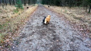 151227 Doggy Date-Stiphoutse-bossen065