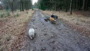 151227 Doggy Date-Stiphoutse-bossen067