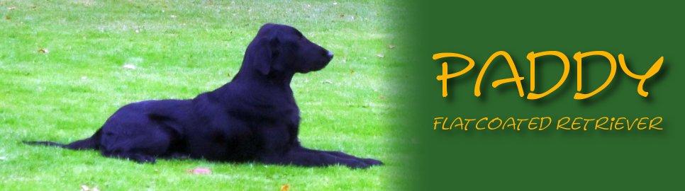 Paddy & Doerak, van pup tot hond